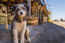 A Street Dog Sat On A Corner