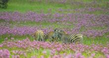 Beautiful Rietvlei Nature Rese...