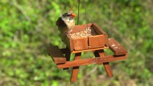A Female Cardinal Eating Seeds On A Wooden Picnic Table Bird Feeder And Chas