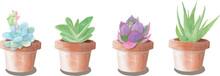 Succulent In Pot Flower Set