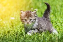 Kitten In The Green Grass