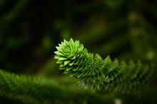 Beautiful Exotic Twing Of Cactus Tree Needles Succulent Green Macro Photo