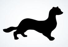 Least Weasel. Vector Drawing I...