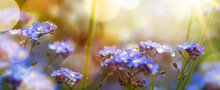 Art Blooming Flower Meadow In ...