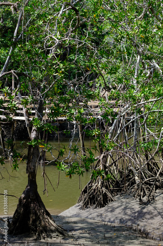 Photo Lowtide and a rickety wooden bridge across a croc infested stream in the Costa R