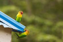 Beautiful Colourful Lovebirds ...