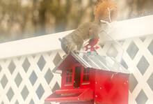 One Brown Squirrel On Bird Fee...