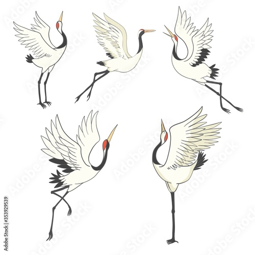 Set of birds. Crane, stork, heron. Vector. Slika na platnu