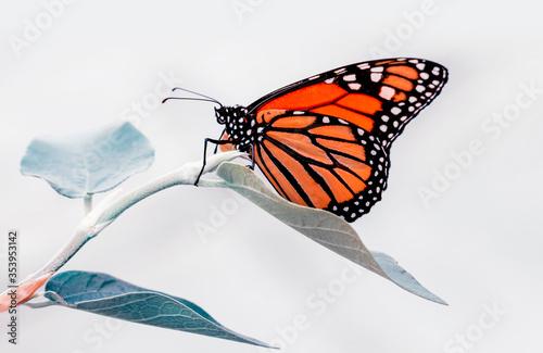 Fototapeta Closeup beautiful butterfly in a summer garden