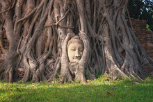 The Buddha Head And Face In Th...