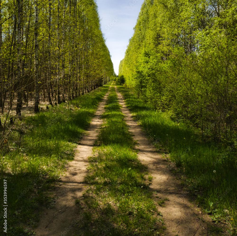 Fototapeta Droga polna przez las.