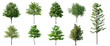 Leinwandbild Motiv Collection Beautiful 3D Trees Isolated on white background , Use for visualization in architectural design