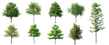 Collection Beautiful 3D Trees ...