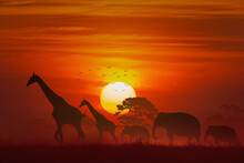 Silhouette Animal, Elephant An...