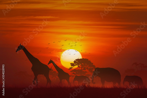 silhouette Animal, elephant and giraffe and grass and tree at sunset