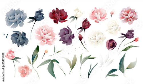 Fotografie, Obraz Set flowers peonies, leaves