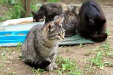 Stray Cats Feeding On The Street