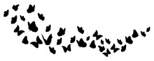 Silhouettes Of Butterflies Fly...