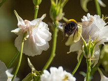 Bee Flying Towards Me