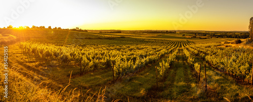 Fototapeta Sunset landscape bordeaux wineyard france, europe Nature, Aquitaine obraz