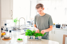 Young Man Picking Leaves Of Greenery During Cooking. Home Gardening On Kitchen. Pots Of Herbs With Basil, Parsley, Thyme. Home Planting And Food Growing. Sustainable Lifestyle, Plant-based Foods.