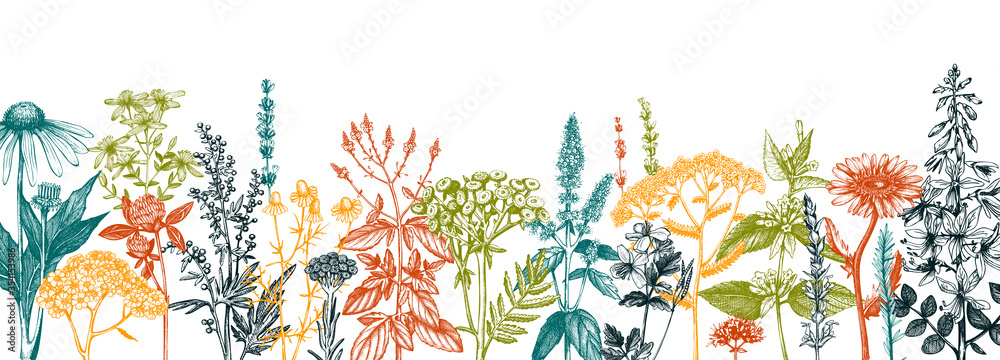 Fototapeta Hand drawn medicinal herbs banner design. Vector flowers, weeds and meadows sketches. Vintage summer plants template. Botanical background with floral elements in engraved style. Herbs outlines