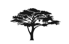 Acacia Tree Silhouette. Austra...