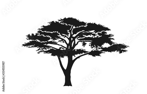 Photo acacia tree silhouette. australian and african tree
