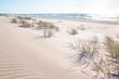 Słoneczna złota plaża wydmy w Polsce