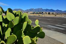 Opuntia Sp. Cactus And Agava S...