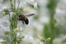 Wildflowers And Bees 2020 I
