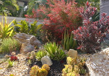 A Gorgeous Xeriscape With A Va...