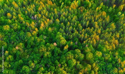 Obraz Aerial view colorful green summer forest at dawn - fototapety do salonu
