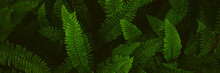 Fern Plants. Fern Leaf. Green ...