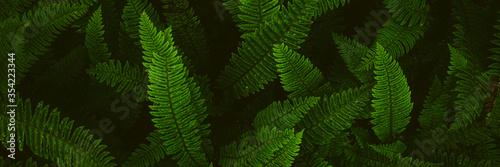 Photographie Fern plants