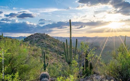 Valokuvatapetti Desert Sunset: Saguaros and small cacti on hill overlooking the expansive Sonora