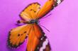 Leinwandbild Motiv Beautiful butterfly on color background, closeup