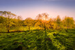 Sunset or dawn in a spring field with green grass, willows and a clear sky. The sun leaving deep shadows.