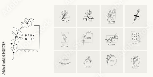 Fototapeta Floral logo and branch. Hand drawn wedding herb, plant and monogram with elegant leaves for invitation save the date card design. Botanical rustic trendy greenery obraz