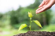 Hands Of Farmer  Nurturing Tre...