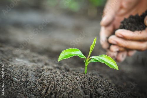 Obraz Planting a tree. Close-up hand of the men planting  the seedlings into the ground, The idea of planting trees to reduce global warming, World Environment Day. - fototapety do salonu