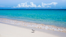 A Tiny Sanderling (calidris Alba) Is Walking Along The Caribbean Beach In Front Of Turquoise Shallow Water And Source Clouds At The Horizon