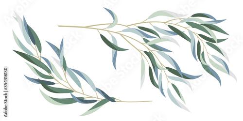 Photo eucalyptus branches