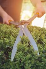 Bare Hands Of Unknown Gardener...