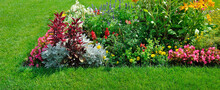 Blooming Colorful Summer Flowers On A Park.Wide Photo.