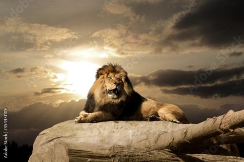 Foto Yawning lion