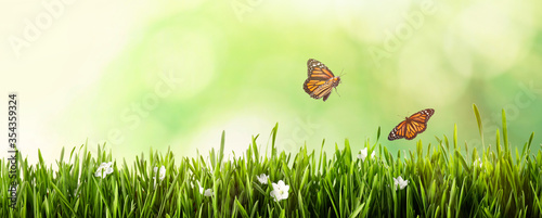 Monarch butterflies flying above green grass. Banner design