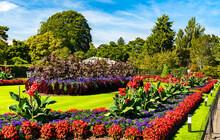 Flowers At Kew Royal Botanic Gardens In London, England