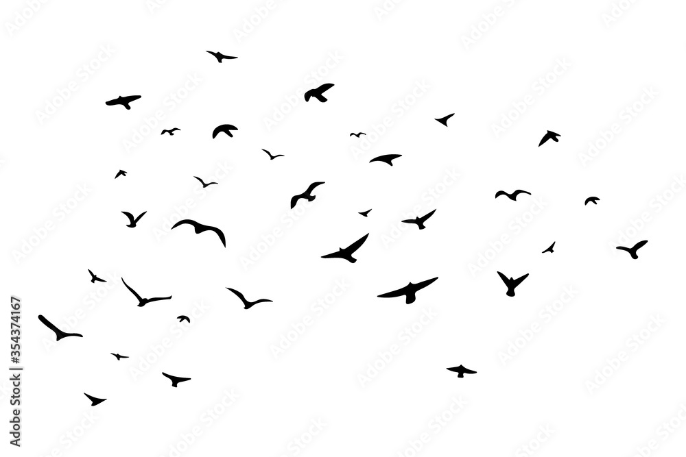 Fototapeta A flock of flying birds. Vector illustration. EPS 10