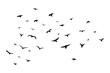 A flock of flying birds. Vector illustration. EPS 10